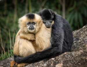 monkeys-hugging